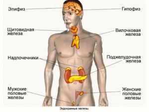 6 Izmeneniya_v_organizme_v_protsesse_stareniya