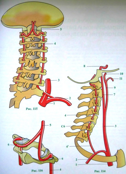 Osteoxondroz_sheyinogo_otdela_pozvonochnika_simptomi_i_lechenie_sindrom_pozvonochnoy_arterii
