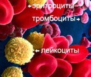 Kak_povysit_immunitet_vzroslomu_cheloveku_narodnimi_sredstvami