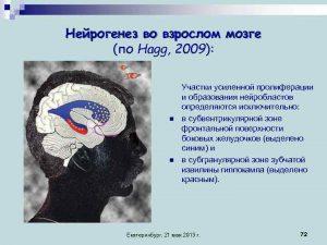 Udivitelnye_fakty_o_chelovecheskom_mozge-(prodolzhenie)