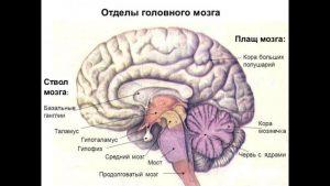 Sosudistye_zabolevaniya_golovnogo_mozga nevrologiya
